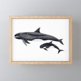 Pygmy killer whale Framed Mini Art Print