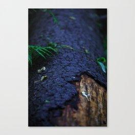 Bark of a dead tree Canvas Print