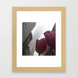 Empire Tulip Framed Art Print