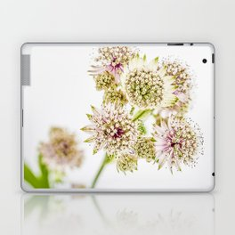 Astrantia major Laptop & iPad Skin