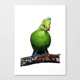KNYSNA TURACO Canvas Print