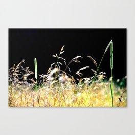 gold&black grass Canvas Print