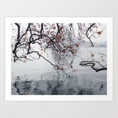 Plane Tree Branches Hanging Over Lake Art Print