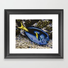 Blue Tang Framed Art Print