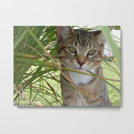 Cat in the Grass Metal Print