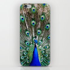 Vibrant Display iPhone & iPod Skin