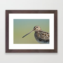 Snipe Framed Art Print