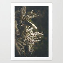 October plumage Art Print