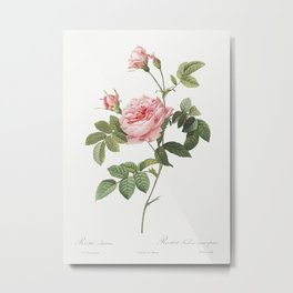 Boursault Rose, also known as Rose Turbine without Thorns (Rosa Inermis) from Les Roses (1817–1824) Metal Print