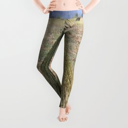 Harvested Sesame Crop Leggings