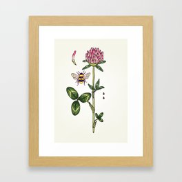 aromatic red clover Framed Art Print