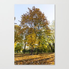 Park in the fall Canvas Print