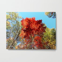 Red Maple in October Metal Print