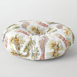 Ernst Haeckel - Nudibranchia (Snails) Floor Pillow