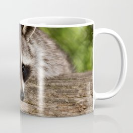 Adorable Raccoon Photo Coffee Mug