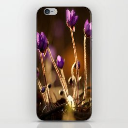 Hepaticas in The Glare Of The Sun #decor #society6 iPhone Skin