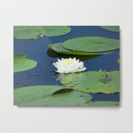 Floating Lily Metal Print