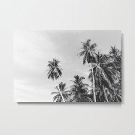Palms Trees on the San Blas Islands, Panama, Black & White Metal Print