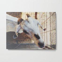 mama goat Metal Print