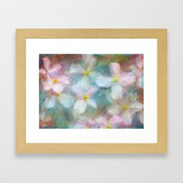 Clematis commotion Framed Art Print