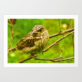 Young thrush in the beautiful plumage Art Print