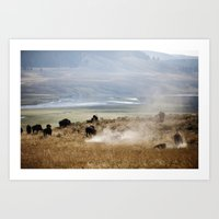 WHERE THE BUFFALO ROAM Art Print