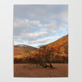 Cumbria nature Poster