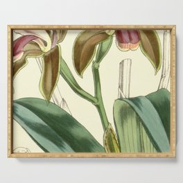 Cattleya bicolor Curtis 82 4909 (1856) Serving Tray