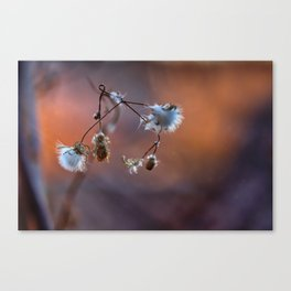 Stops the colors Canvas Print
