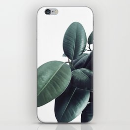 Ficus Elastica #13 #decor #art #society6 iPhone Skin