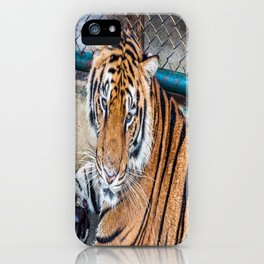 Tiger, My Bottom is Not Made Out of Springs iPhone Case