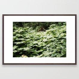 of field (Oregon) Framed Art Print