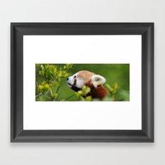 Red Panda 1 Framed Art Print