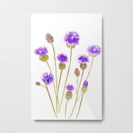 purple thorny wildflower Metal Print