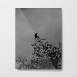 Raven #4 Metal Print
