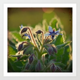 The Beauty of Weeds Art Print