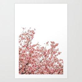 Cherry Blossoms (Color) Art Print