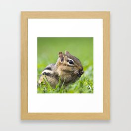 Cute Chipmunk Framed Art Print
