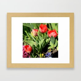 Tulips & Hyacinths  Framed Art Print