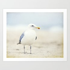 Seagull Beach Photography, Coastal Bird Jersey Shore Art Art Print