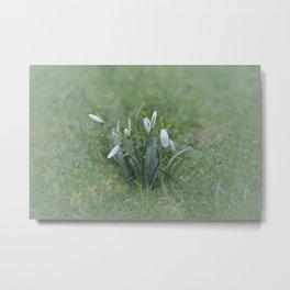 First Spring Flowers Metal Print