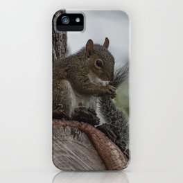 Squirrel Tail iPhone Case