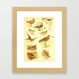 William Playne Pycraft - A Book of Birds (1908) - Plate 14: Waders: Plovers, Curlews, Snipes Framed Art Print