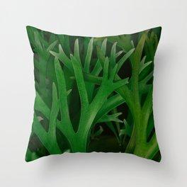 Staghorn Ferns Pattern Throw Pillow