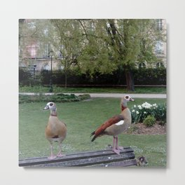 Nature and landscape 7 with ducks Metal Print