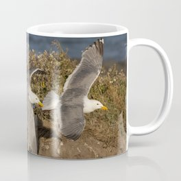 California Seagull (Larus californicus) taking off from a bluff in Mendocino, California. Coffee Mug