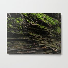 Mossy Growth Metal Print
