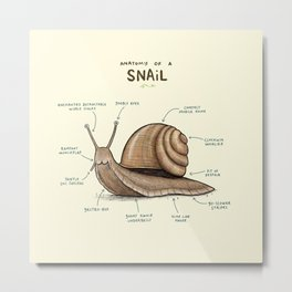 Anatomy of a Snail Metal Print