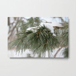 Winter Pine Metal Print