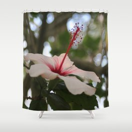 Hibiscus flower on its tree Shower Curtain